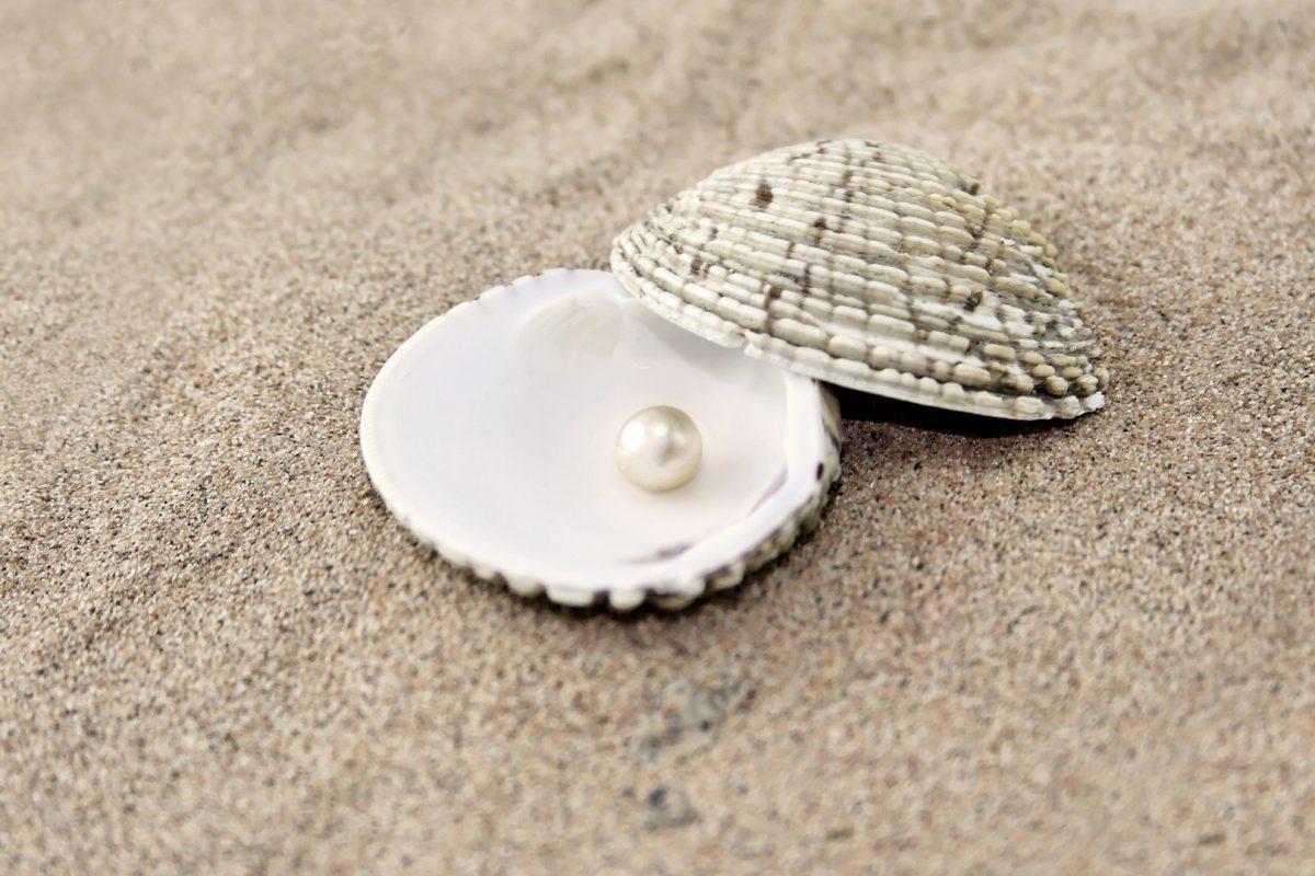 Drogocenna perła – (Mt 13,44-52)