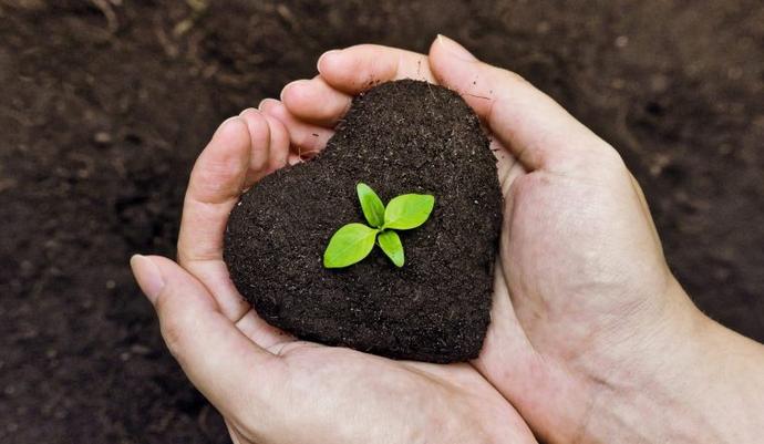 Ogrodnicy serc – (Łk 8,4-15)