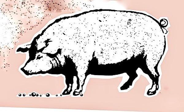 Perły i świnie – (Mt 7,6.12-14)