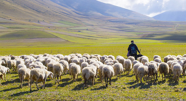 Owce – (J 21,15-19)